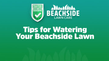 beachside lawn care tips for watering your lawn