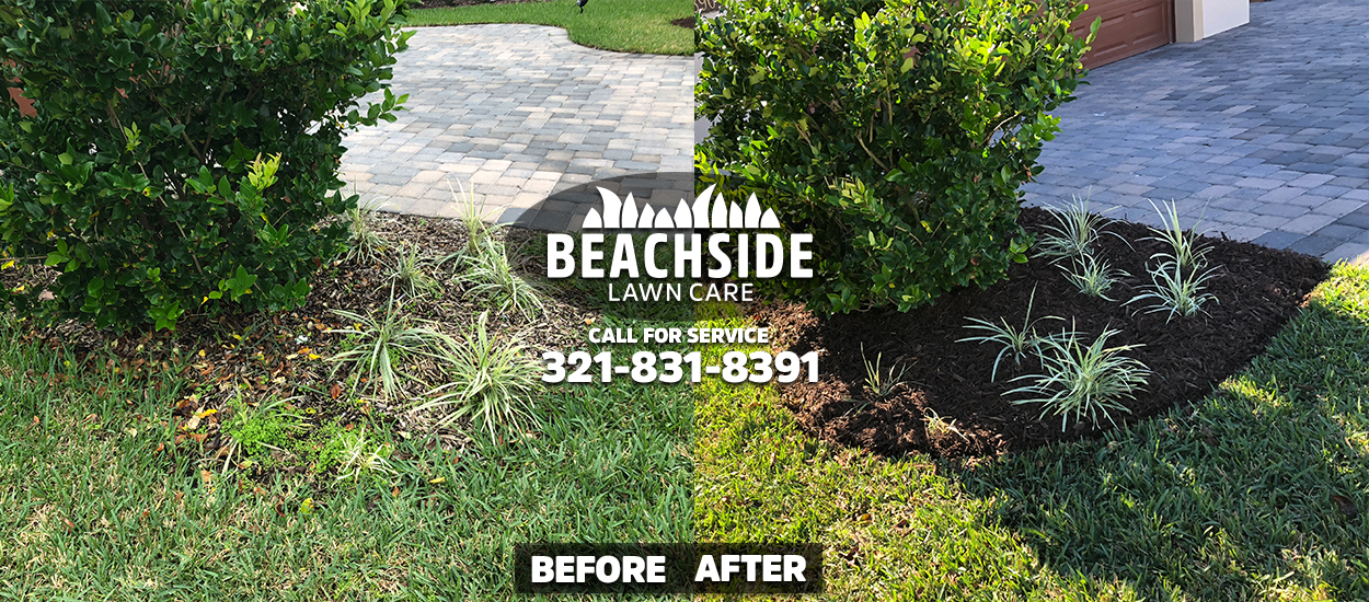 beachside lawn care before after viera mulch installation