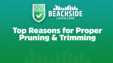 beachside lawn care tips for pruning trimming