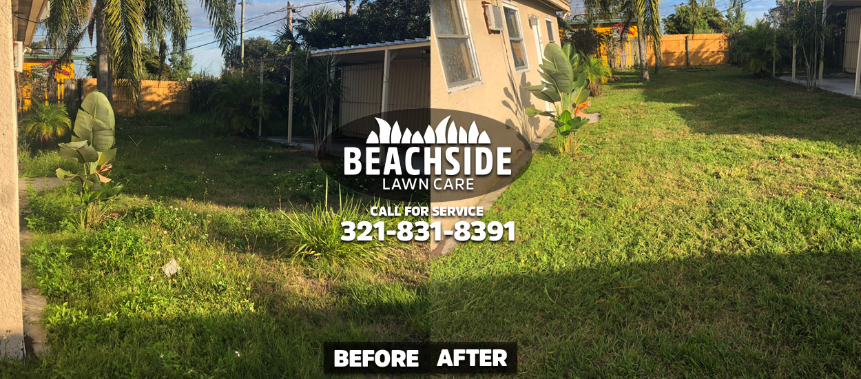 beachside lawn care before after melbourne yard clean up