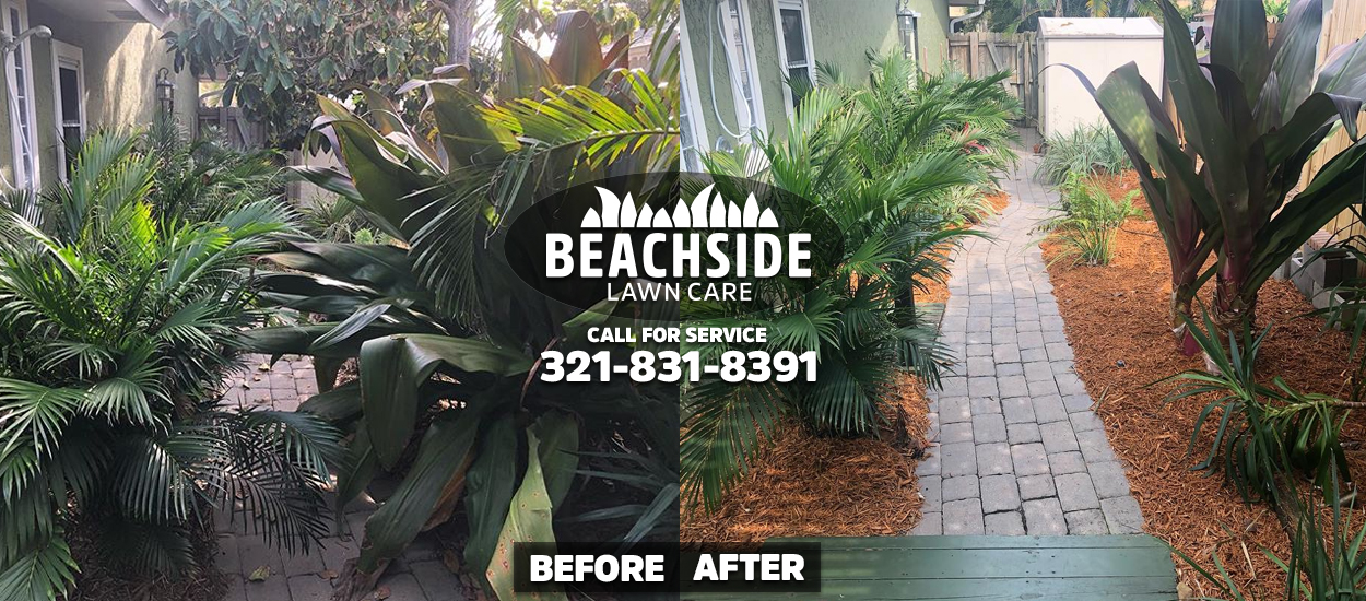 beachside lawn care before after indialantis weeding tree trimming yard cleanup mulch installation